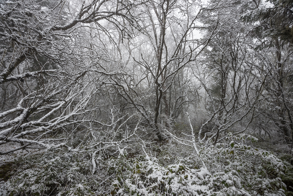 Магический зимний лес в национальном парке Нуанглонг, Китай