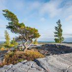 Одинокое дерево на вершине холма в Канаде