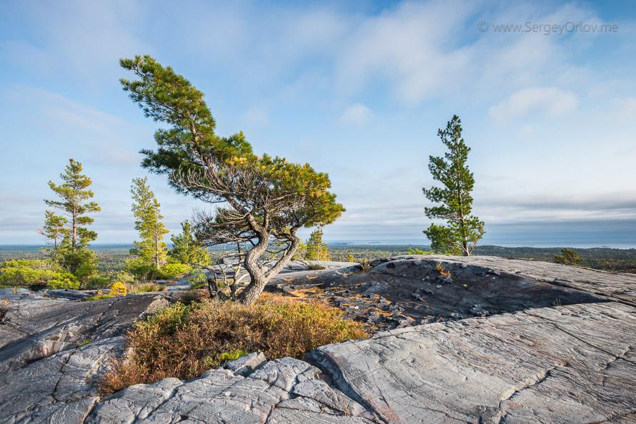 Одинокое дерево на вершине холма, освещенное заходящим солнцем. Киларни, Канада