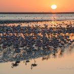Короткая история о фотографии с фламинго на фоне заходящего солнца