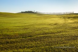 Smooth and endless plowed Tuscany green hills with a villa on a hill and a long cypress alley