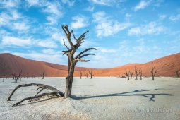 Ancient dead trees of Deadvlei, surrounded by the huge sand dunes of Namib desert